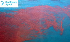 red tide visual from air