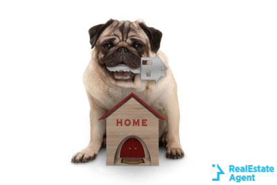 happy pug holding the home key in his mouth