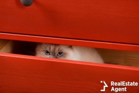 Stealth catto