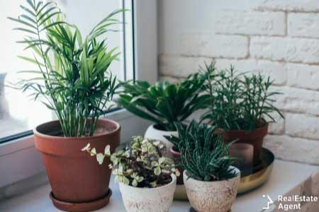 Green house plants