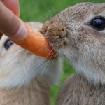 investor carrot