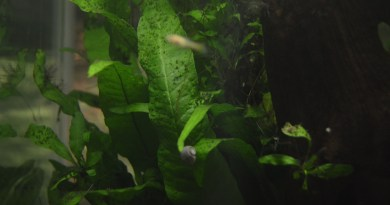 Fish Tank Plants, Planted Tank, Aquarium