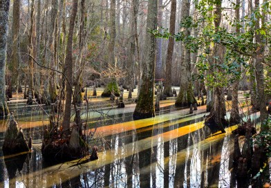 First Landing Cypress swamp trail