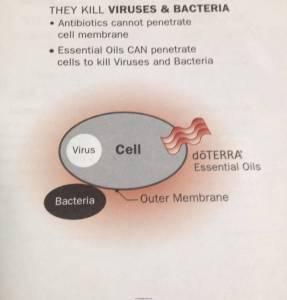 Essential Oils Cellular