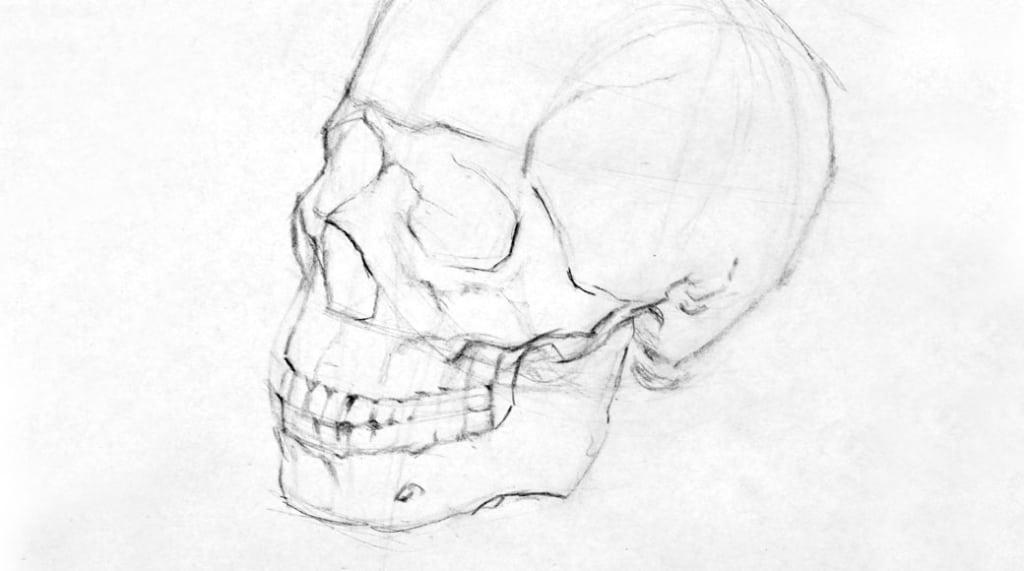 Skull-3_4-1040-1024x571