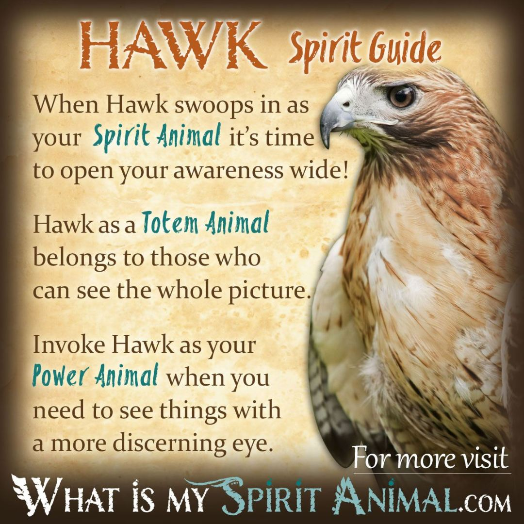 Hawk-Spirit-Totem-Power-Animal-Symbolism-Meaning-1200x1200