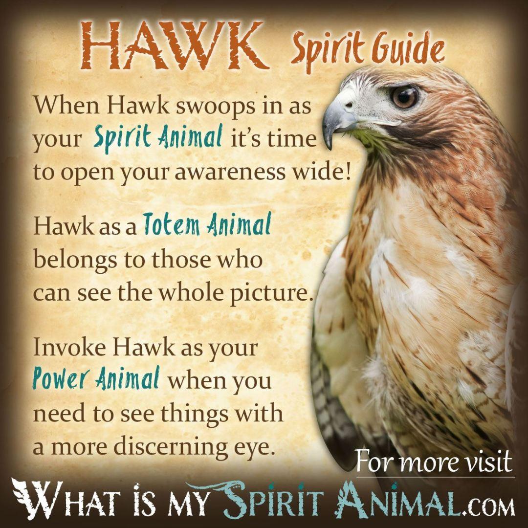 Bird Symbolism & Meanings FULL RESOURCE - ANIMAL SPIRIT
