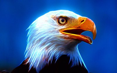 Bird Symbolism & Meanings FULL RESOURCE – ANIMAL SPIRIT GUIDES (Omens, Spirit Animals, Totems)
