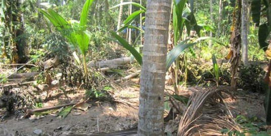 Land for sale at Trivandrum