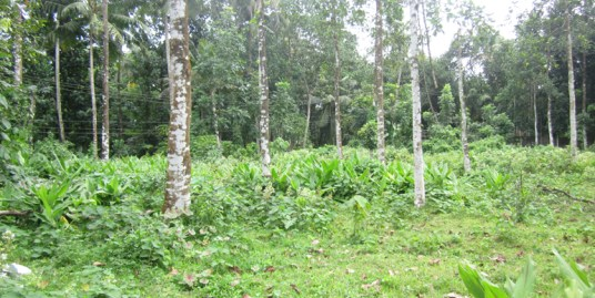 Land for sale at Kottayam