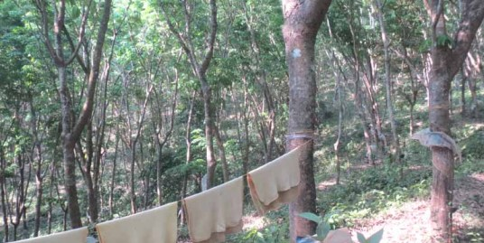 RESIDENTIAL LAND FOR SALE AT KANNUR