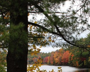View of lake in fall - reduced