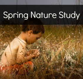 Spring Nature Study Ideas
