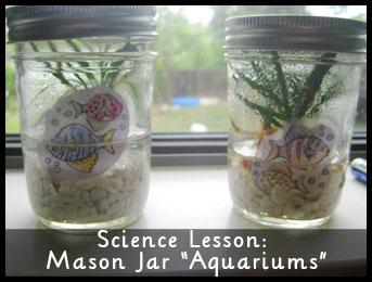 Science Lesson: Mason Jar Aquariums