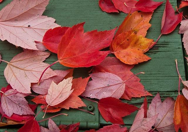 Free Worksheets for Kids: Fall!