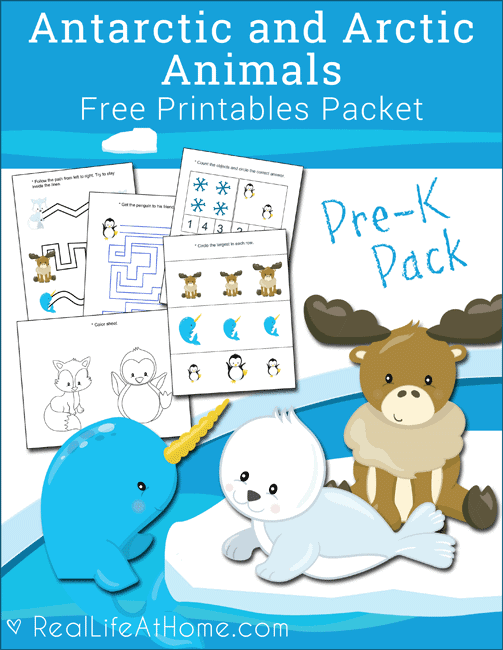 Free Antarctic and Arctic Animals Printables Packet for preschool children featuring line tracing, visual discrimination, counting, coloring, and more. #preschool #printables #ArcticAnimals #PolarAnimals