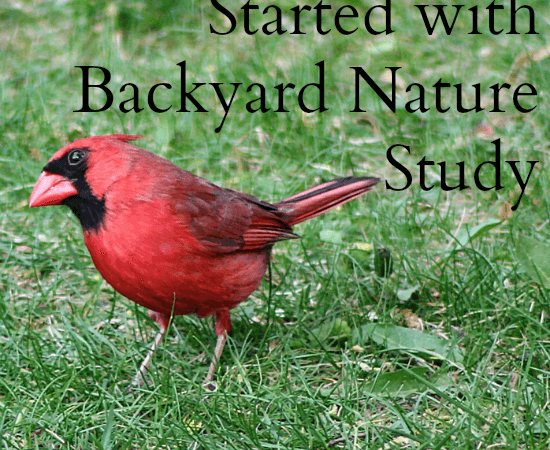 5 Tools to Get Started in Backyard Nature Study