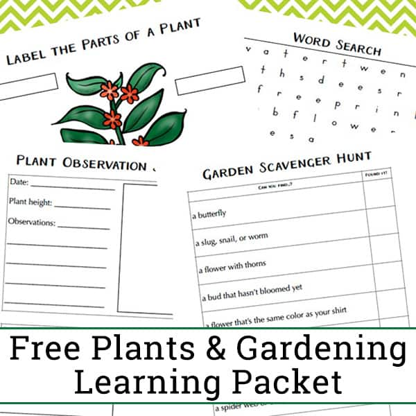 Free Garden and Plant Worksheets for Kindergarten - 2nd Grade. This plant learning packet features