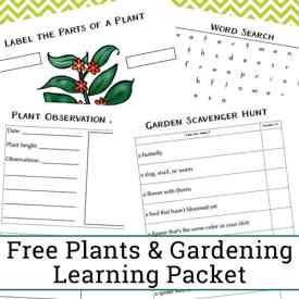 Free Plant Worksheets for Kindergarten – 2nd Grade