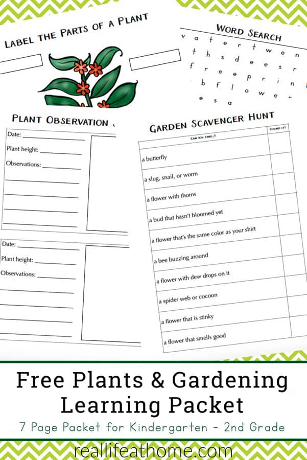 Free Garden and Plant Worksheets for Kindergarten - 2nd Grade - featuring a plant observation journal
