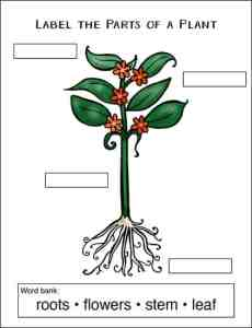 Simple Plant Labeling Page from the Free Garden and Plant Worksheets Packet