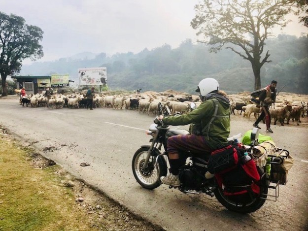 JT rides into a herd of sheep on the road to McLeod Ganj