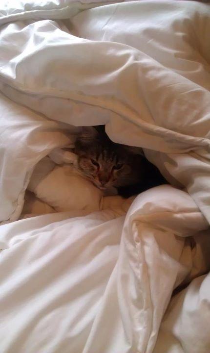 Bedtime Kitty 2