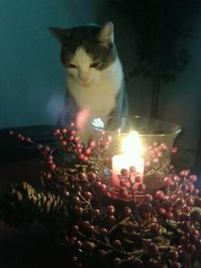 Cat By Candlelight 2