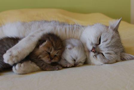 Possibly The Cutest Cats Ever