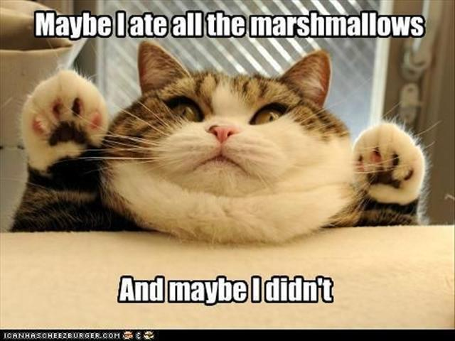 Maybe I ate all the marshmallows And maybe I didn't