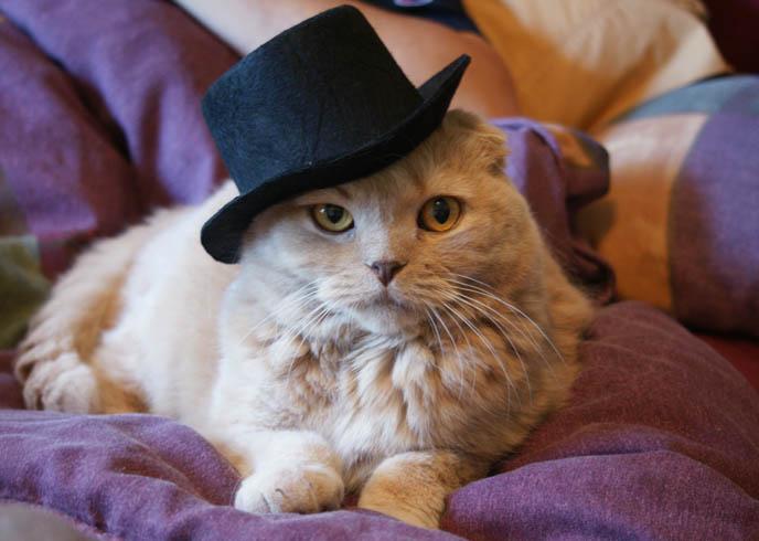 15 Cute Cats Wearing Hats \u2013 Really Cute Cats