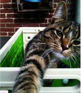catselfie4