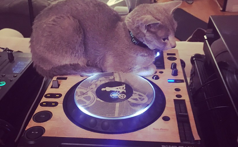 Tonight's kittenloaf is also a pro DJ