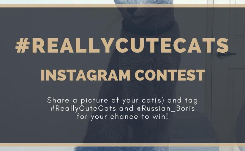 Share a picture of your cat(s) on Instagram using and @russian_boris for your chance to be featured on our feed and win some sweet cat goodies