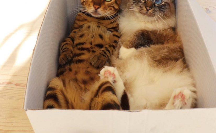 Cats Happy Nelly Birthday
