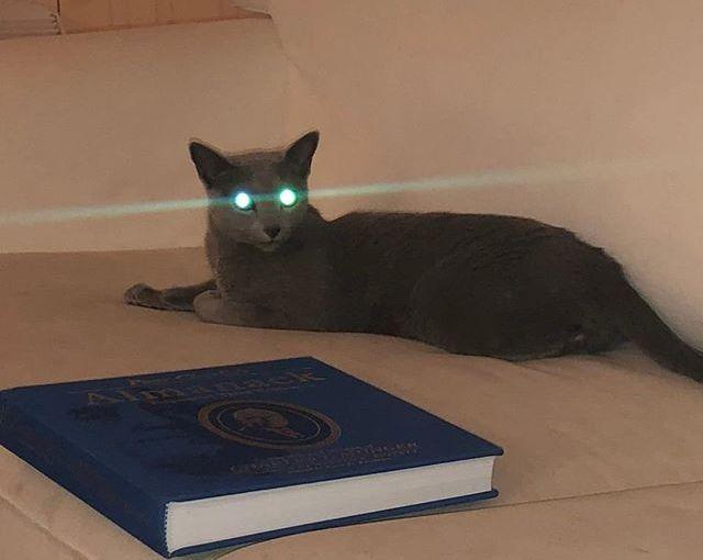 Cat… or alien?? 🐱👽 #alien #aliens #catsofinstagram #cats #kitty #instacat #catstagram #catlover…