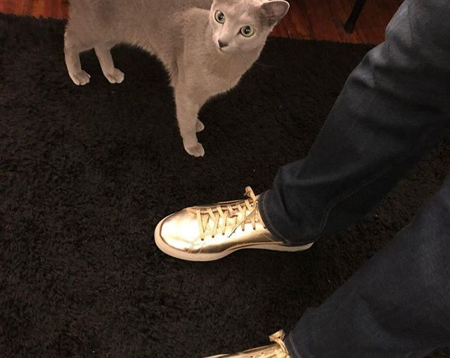 Why are my hooman's shoes so shiny?? 👟 #goldshoes #shoes #gold #fashion #shoestagram #shoesoftheday…