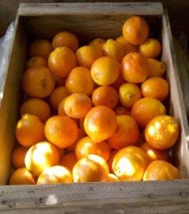 modified citrus pectin