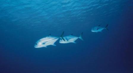 tuna mercury and radiactivity