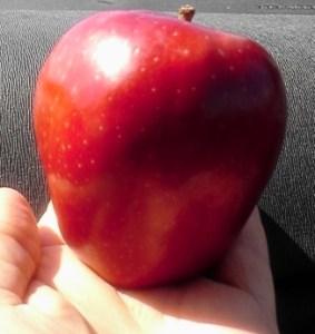 organic versus conventional foods