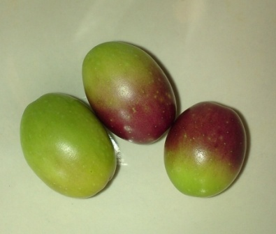 olives and breast cancer