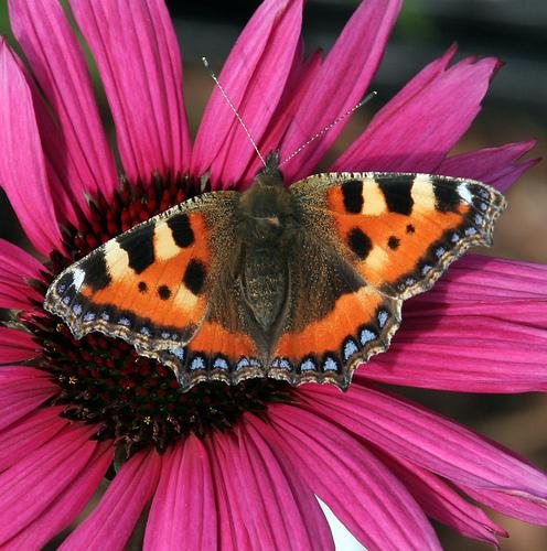 organic farming biodiversity