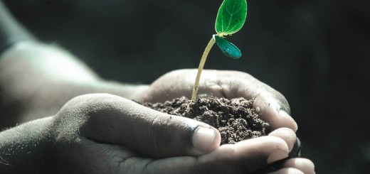 Soil bacteria melanoma