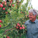 Steve Ela inspects an apple tree heavy with fruit
