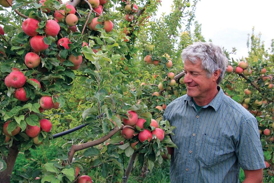 Steve Ela inspects an apple tree heavy with fruit