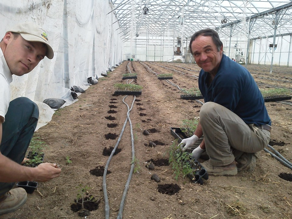 Mike Brownback grows tomatoes in soil at Spiral Path Farm in Pennsylvania