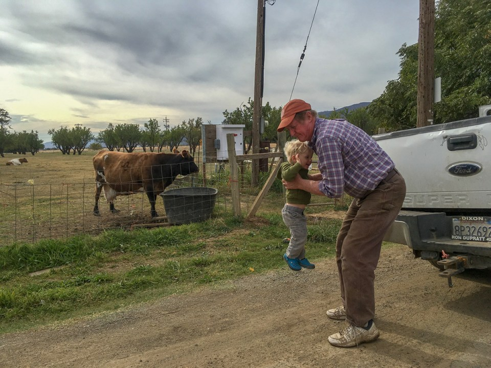 Paul Muller picks up his grandson while a cow drinks from a trough on a farm road at Full Belly Farm California.