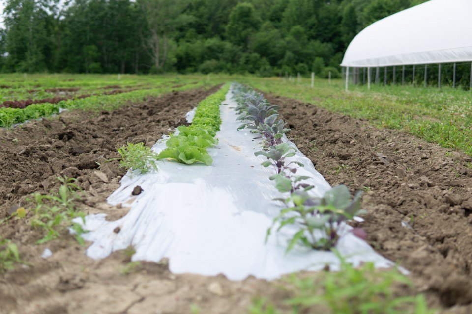 Crops growing in soil at the Martin Family Farm Michigan