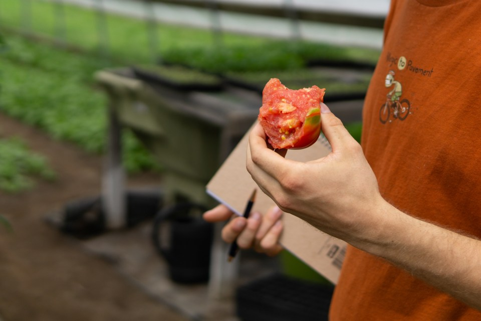 tasting a hearty soil-grown tomato at the Martin Family Farm Michigan