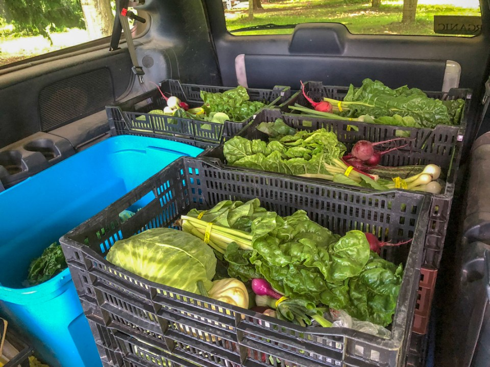 bins of fresh vegetables packed in a vehicle for market